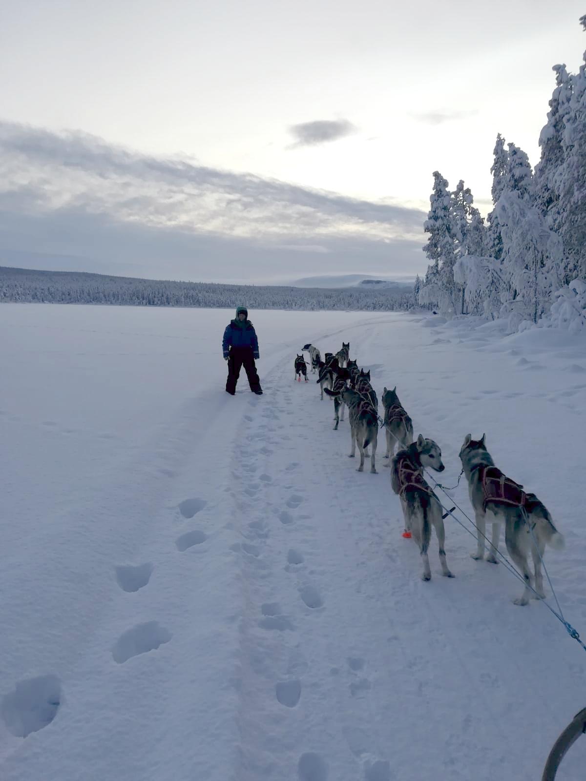 JokkmokkArcticDream_December_Midwinter-dogsled