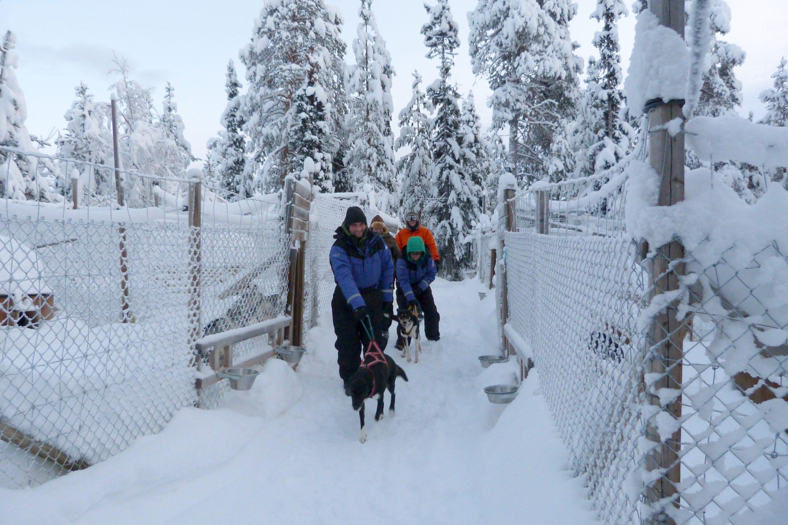 Jokkmokk_December_Prepare-for-dogsled