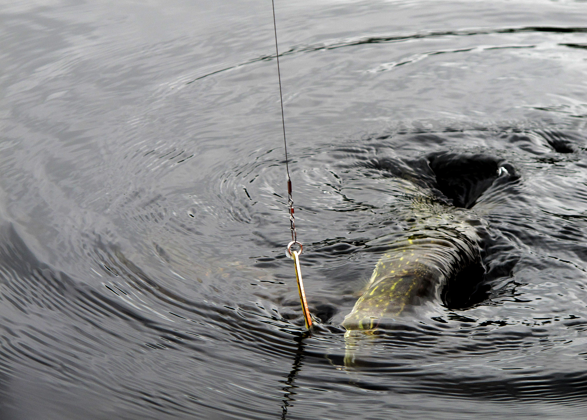 JokkmokkArcticDream_ArcticAdventure-Fishing2 (1)