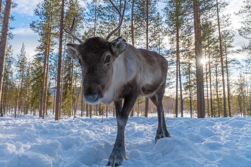 Jokkmokk-SámiCulture -Lenatorp (2)