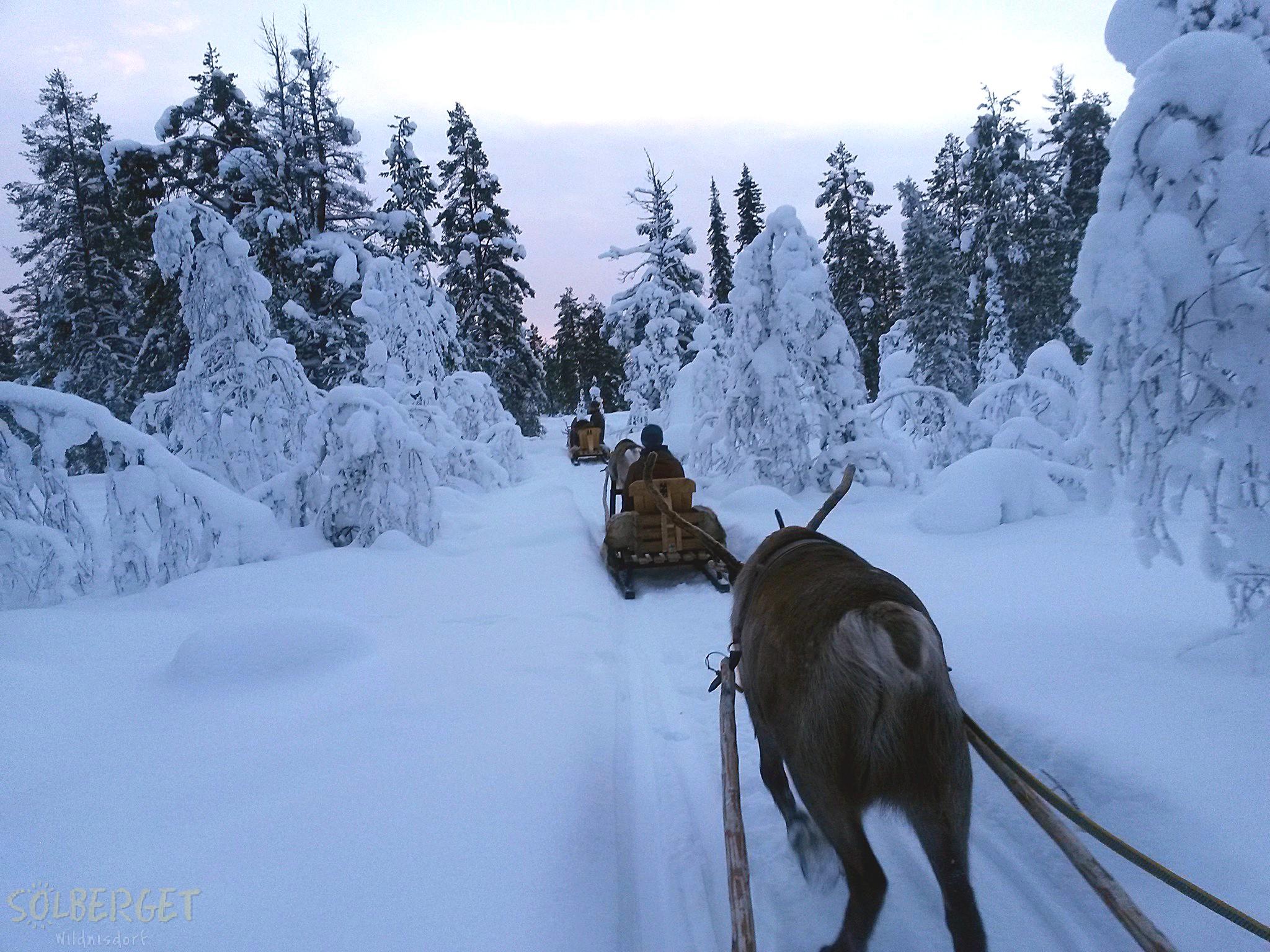 JokkmokkArcticDream-Solberget-reindeersafari