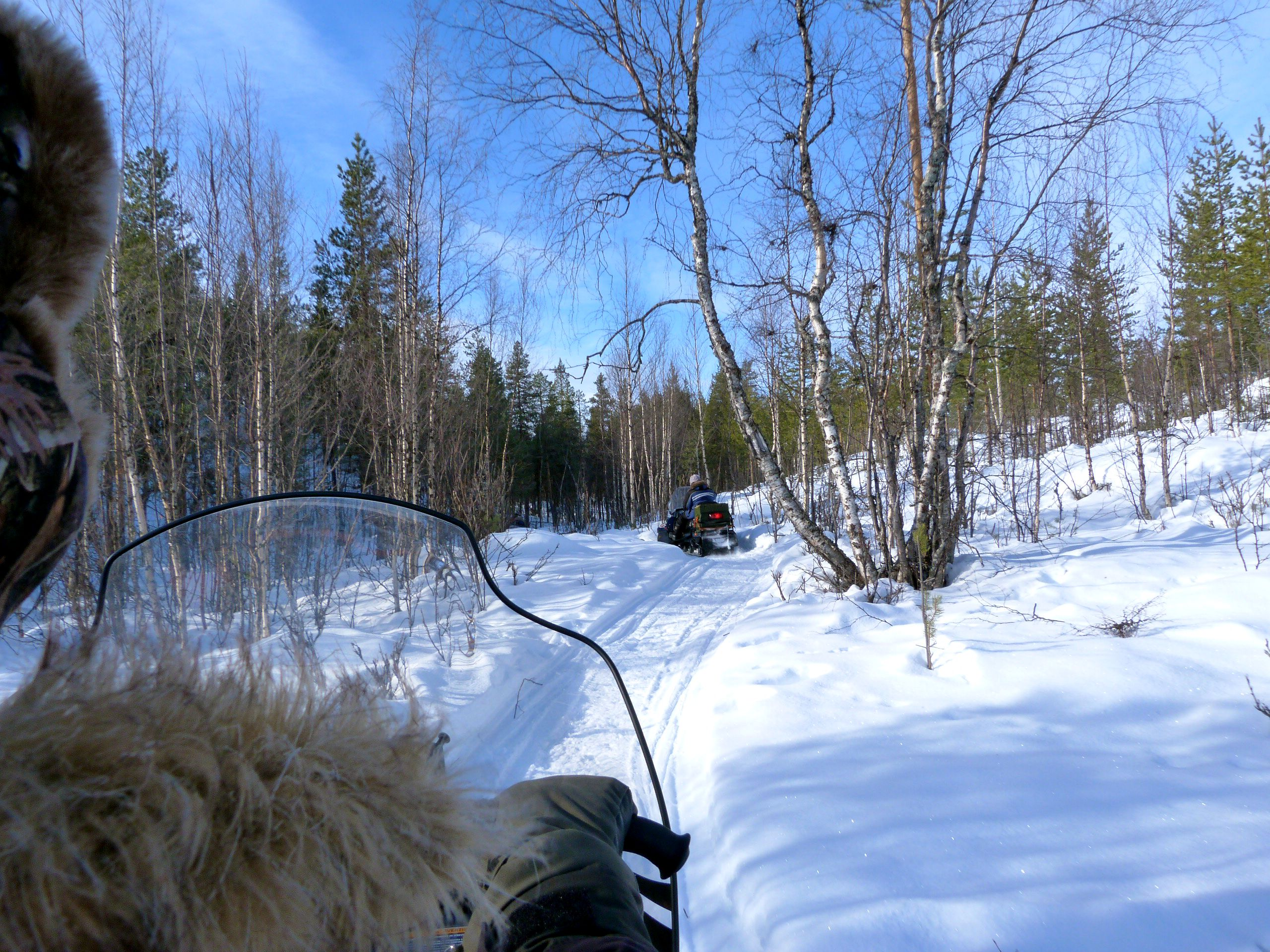 Jokkmokk-snowmobile-forest