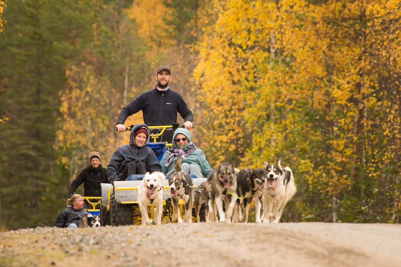 Gasten doen een wagen tour met huskies