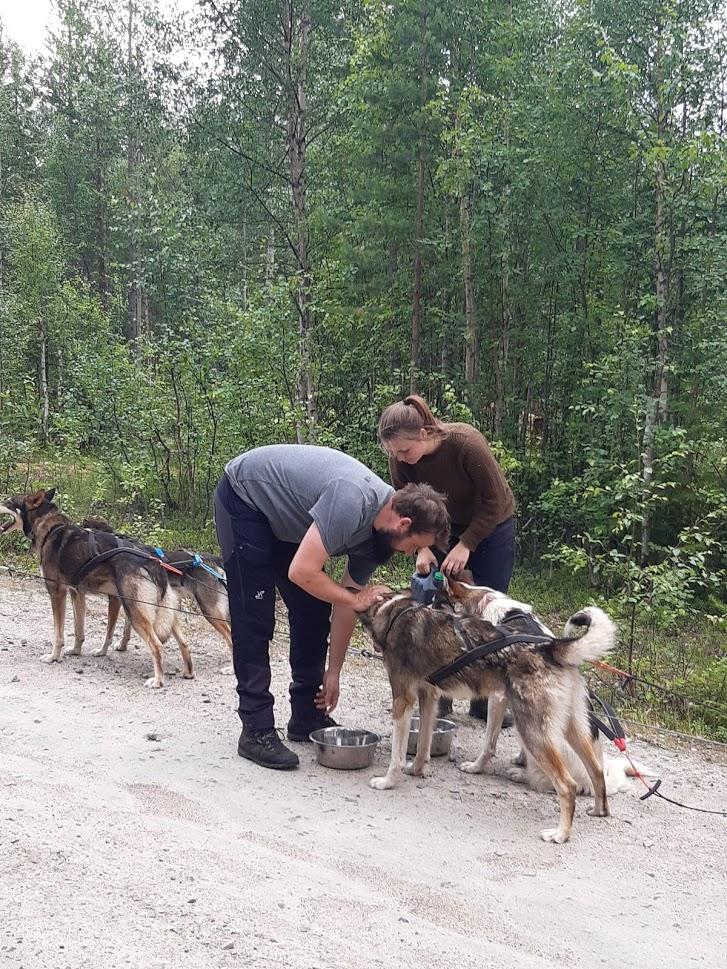 Gasten verzorgen honden