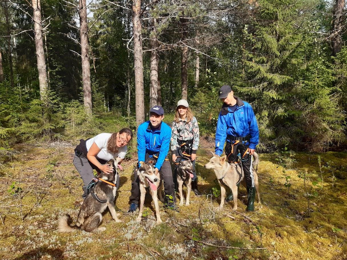 Wandelen met huskies